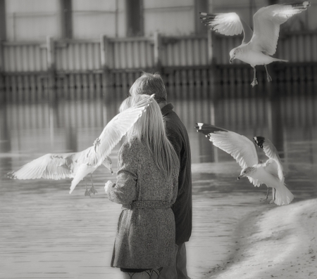 Seagull Attack