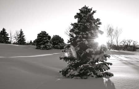 Colorado Sneeuw Shine Stockfoto - 13541429