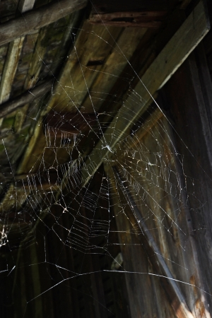 spider net: Big spider net on the abandoned attic