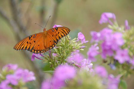 wingspan: butterfly wingspan