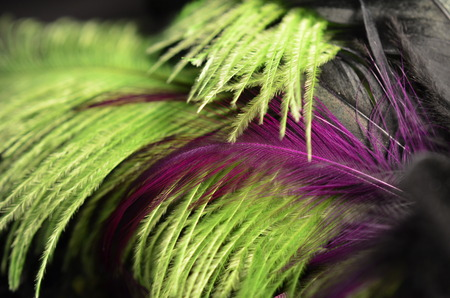 black boa: green and purple feather background