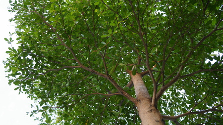 sturdy: Sturdy Tree provides shade for all