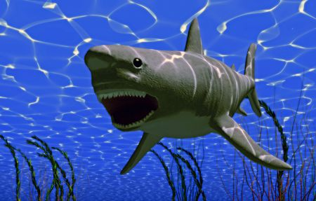 the white big shark jaws (3D rendering) photo