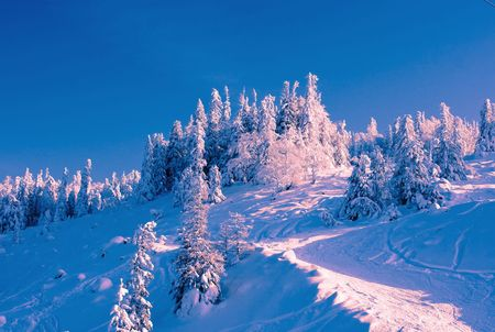 beautiful winter forest landscape photo  photo
