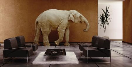 (3D 렌더링) 안에 코끼리와 함께 현대적인 인테리어