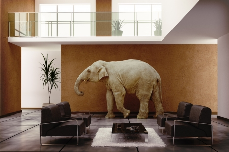 elephant in home photo