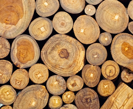 Background of dry teak  logs stacked up on top of each other in a pile photo