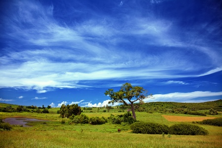 Beautiful summer landscape with blue sky Stock Photo - 10849028