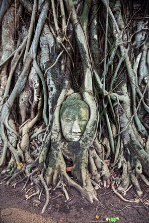 cabeza de buda: el jefe de la piedra arenisca de Buda, en Ayutthaya.Thailand. Foto de archivo