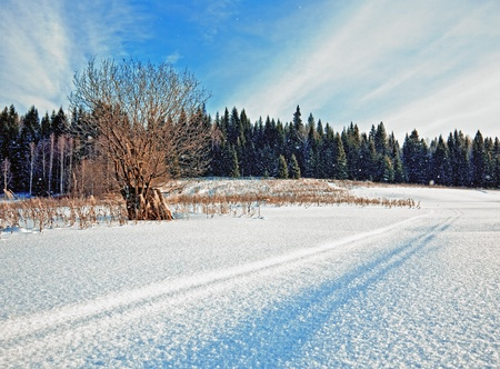 snowcovered: snow-covered road in winter field