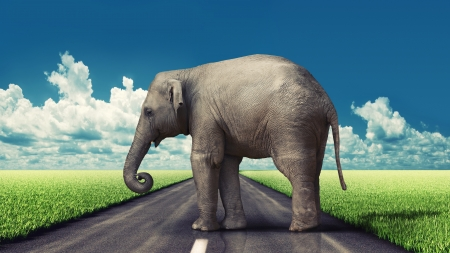 obstruction: elephant on the road concept