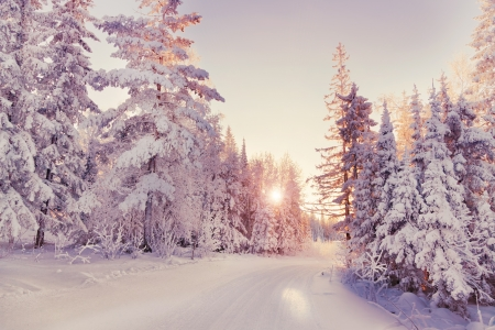 Beautiful winter landscape in the forest. Sunset