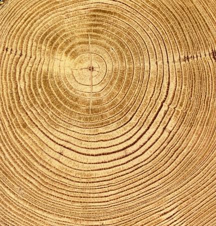 circulos concentricos: cerca de la textura de madera del corte