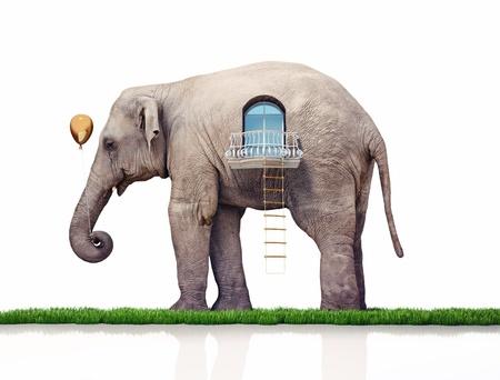 elephant as a house  creative concept photo