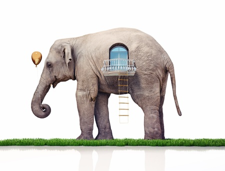 rope ladder: elephant as a house  creative concept