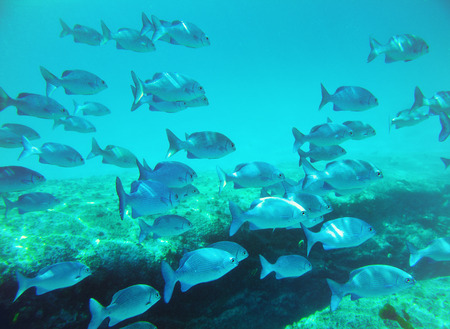 similan islands: school of fish underwater  Similan islands  Thailand
