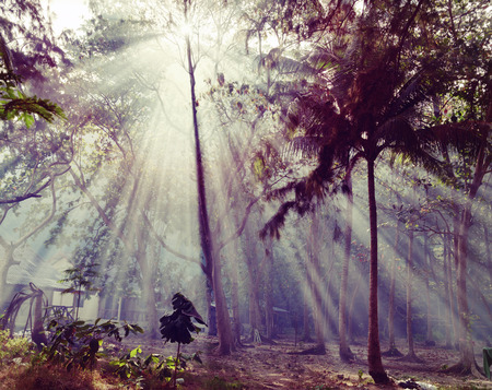 Sunlight rays pour through leaves in a rainforest in Thailand   HDR  photo