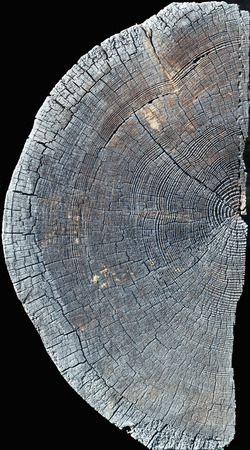 isolated half of the old wood slice texture  photo