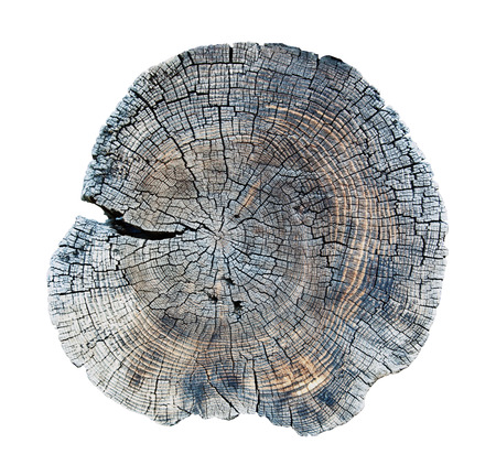 isolated old wood texture  photo