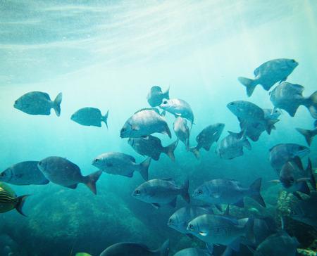 shoal: school of fish underwater. Similan islands. Thailand