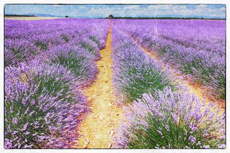 lavendin: vintage fresco style of the lavender field landscape Stock Photo