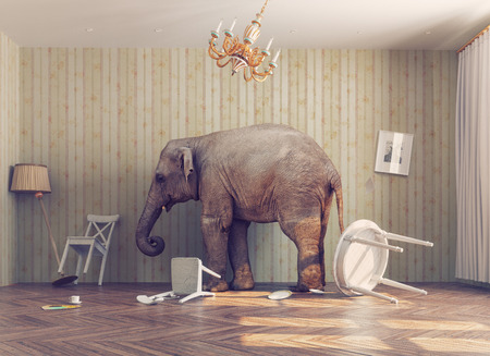 awkward: a elephant calm in a room. photo combinated concept Stock Photo