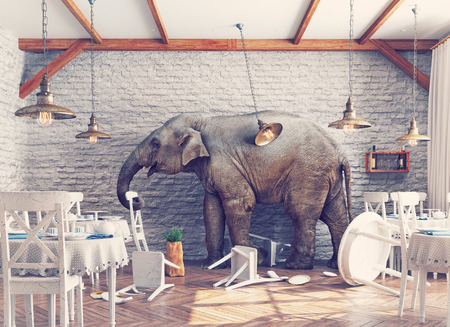 awkward: an elephant calm in a restaurant interior. photo combination concept