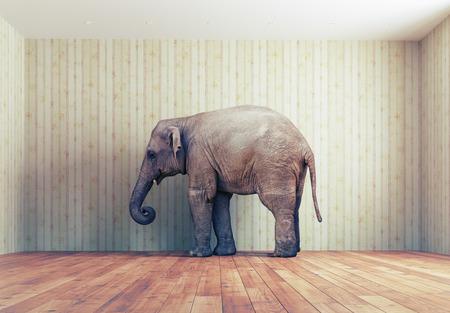 pokoj: osamělý slon v místnosti. Kreativní koncept Reklamní fotografie