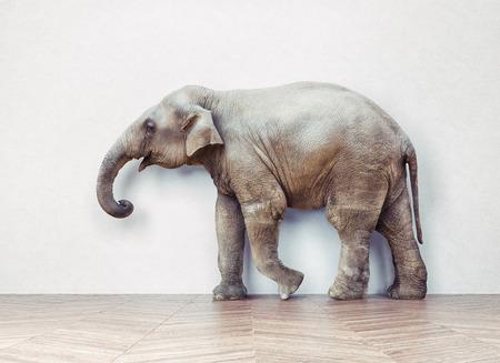 흰 벽 근처의 방에있는 코끼리 진정. 크리 에이 티브 개념 스톡 콘텐츠