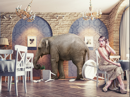 scared woman: an elephant calm in a restaurant interior. photo combination concept