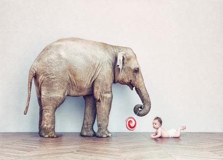 빈 방에 아기 코끼리와 인간의 아기. 사진 조합 개념 스톡 콘텐츠