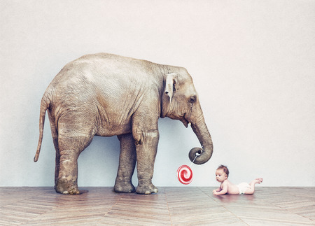 wood room: baby elephant and human baby in an empty room. Photo combination concept