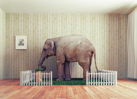 Een kalf van de olifant als huisdier. Foto combinatie concept