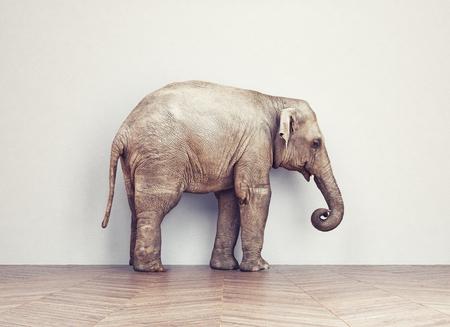 koncept: en elefant lugn i rummet nära vit vägg. kreativt koncept
