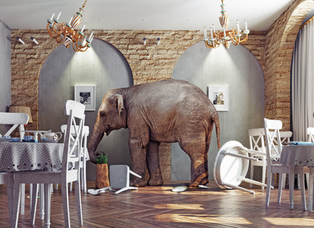 bedlam: an elephant calm in a restaurant interior. photo combination concept