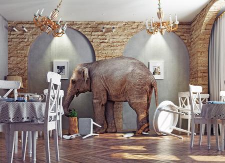 bedlam: an elephant calm in a restaurant interior. photo combination concept