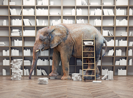 an elephant  in the room with book shelves. Creative concept 스톡 콘텐츠