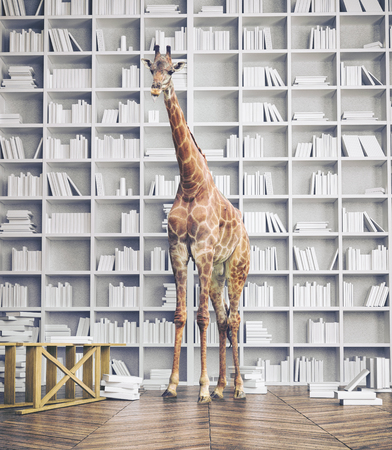 giraffe in the room with book shelves. Creative photo combination concept 스톡 콘텐츠