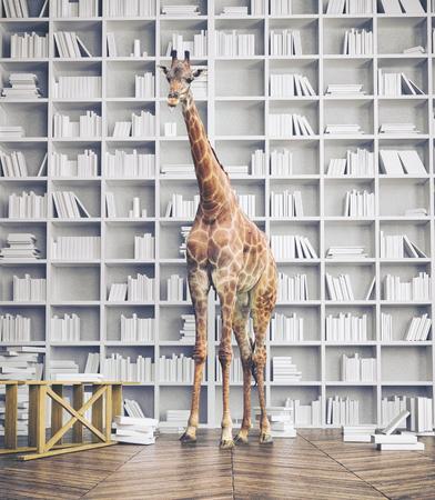 giraffe in the room with book shelves. Creative photo combination concept Stockfoto