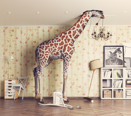 giraffe breaks the ceiling in the living room. Photography combination concept