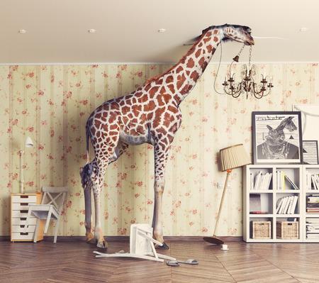 jirafa rompe el techo de la sala de estar. Fotografía combinación del concepto