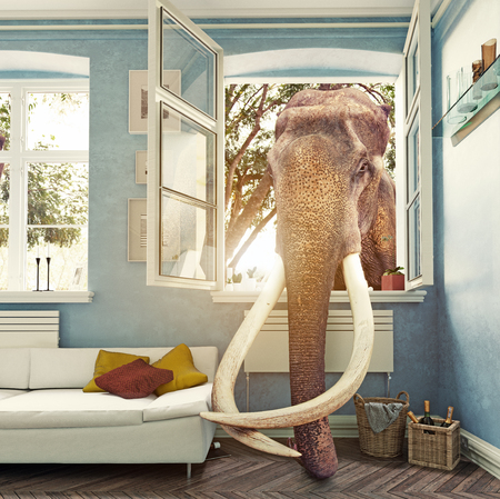 The elephant in the room window, Photo combination concept Imagens - 72435171
