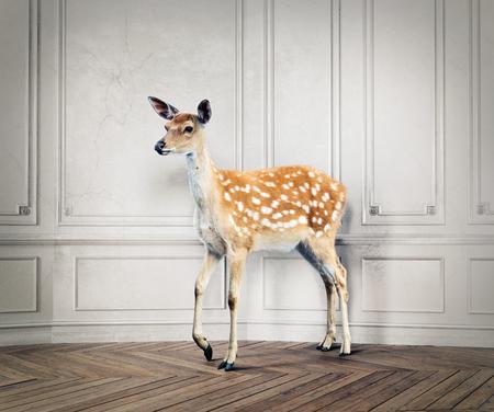 het wilde hert in de luxe designkamer. 3d elementen en de illustratie van de fotocombinatie