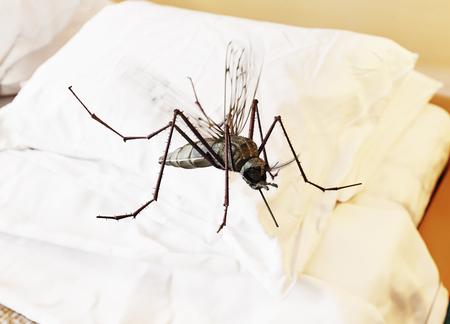 寝室に蚊が飛んでいます。3 D レンダリング概念 写真素材