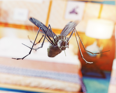 Flying mosquito in the bedroom. 3D rendering concept