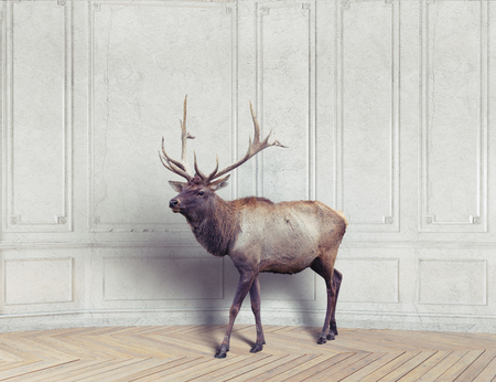 the wild deer in the luxury design room. 3d elements and photo combination  illustration