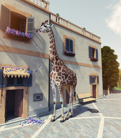 Giraffe eats flowers from the window of the house second floor. Media mixed concept. Banco de Imagens