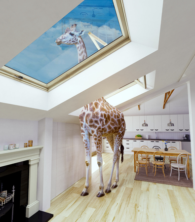 Giraffe looks out into the attic window. Media mixed concept.