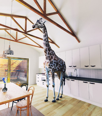 Giraffe in the attic window. 3d rendering elements and photo mixed concept.
