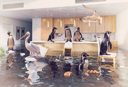 ocean birds in the flooding kitchen interior. Creative media mixes concept.